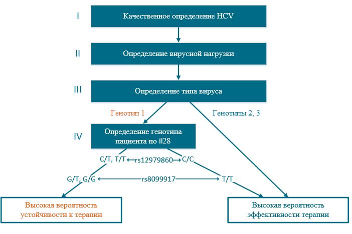 Основные схемы лечения гепатита С 1 генотипа
