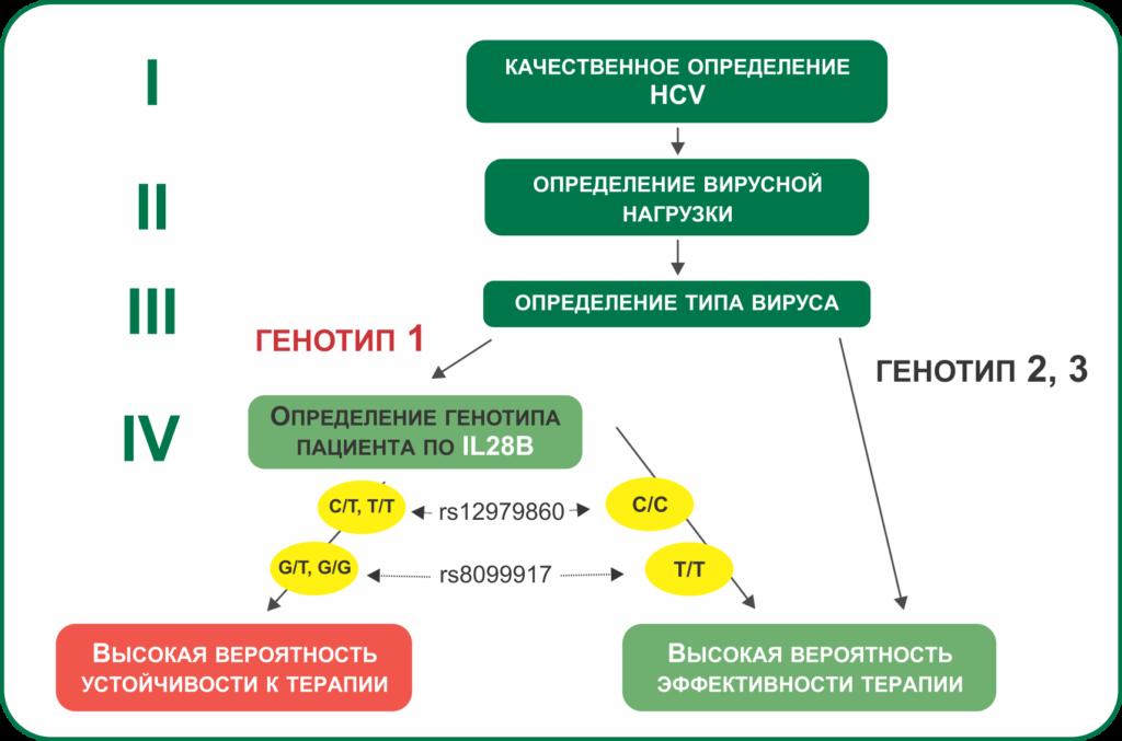 Генотипы гепатита с