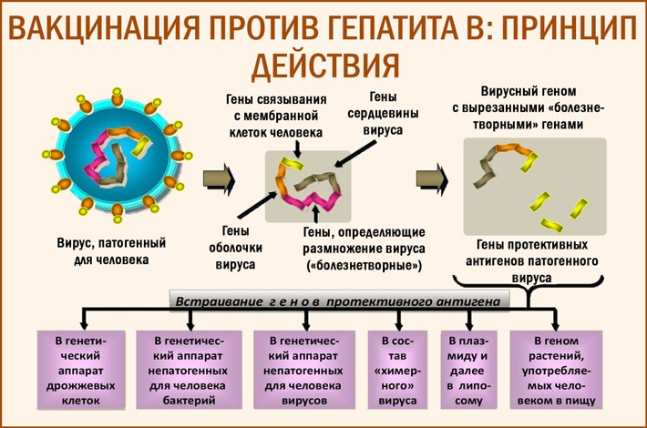 Можно ли после прививки заболеть гепатитом В